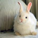 Hansa Toys Snow Rabbit